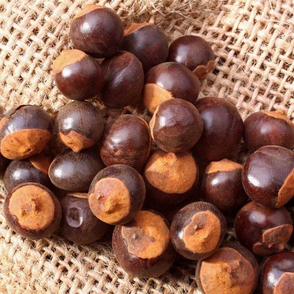 Semillas de guarana