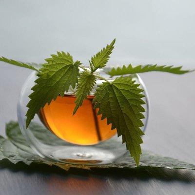Taza de te con hojas de ortiga